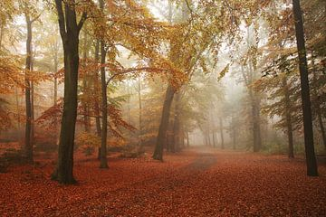 Herfst en Nevel 1 van Joop de Lange