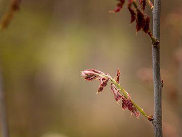 Frühling im Wald von Anke de Haan