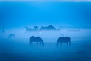 Grazende paarden in de mist bij Dorkwerd in Groningen van