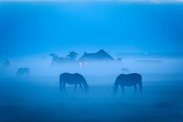 Grazende paarden in de mist bij Dorkwerd in Groningen van Evert Jan Luchies