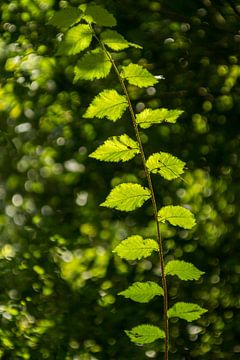 Green leafs von Irene Lommers