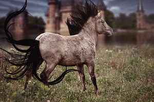 Fantasy paard van