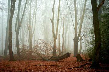 Gevallen een onaangeroerd in het Speulderbos