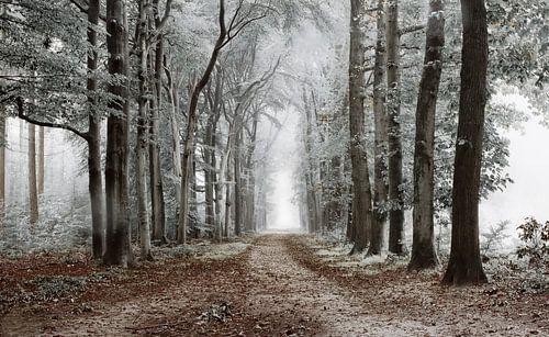 Winter in Lochem. van