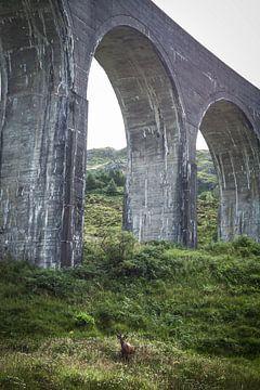 Rotwild unter dem Viadukt von Glenfinnan von Ken Costers