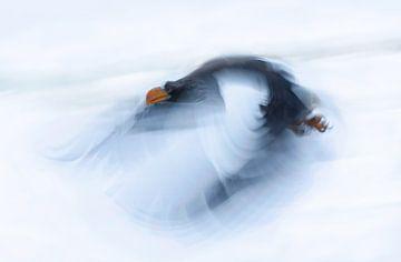 Ein mächtiger Vogel, Cheng Chang von 1x