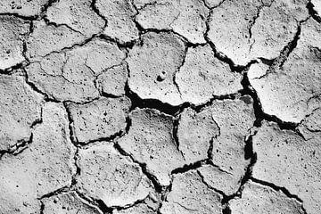 Trockener Sand und ein Schneckenhaus von RUUDC Fotografie