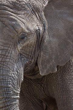 close elephant von anja voorn