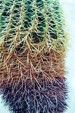 Bunter Kaktus von