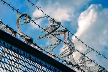 Gevangen in het hek van Norbert Sülzner
