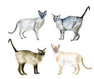 Siamkatzen in Aquarellfarbe