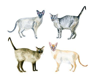 Siamese katten in aquarel van Ivonne Wierink