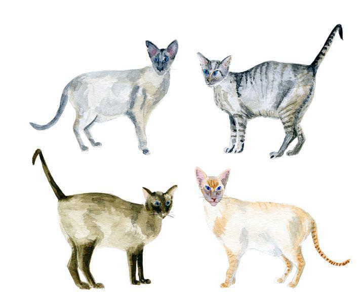 Siamkatzen in Aquarellfarbe von Ivonne Wierink