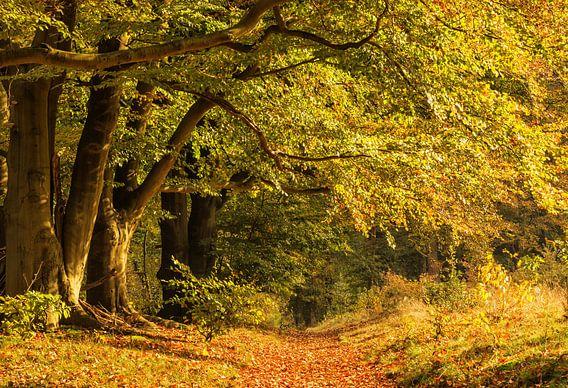 Bos in herfstkleuren van Ilya Korzelius