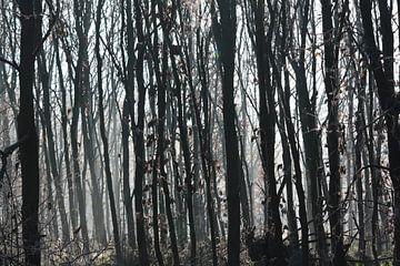 donkere bomen  van Danique Van Dijk