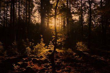Magische Herbstskulptur im Wald von Herman Kremer
