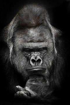 Düstere Gedanken eines mächtigen männlichen Gorillas über Ökologie und Uganda, schwarz-weißes Foto,  von Michael Semenov