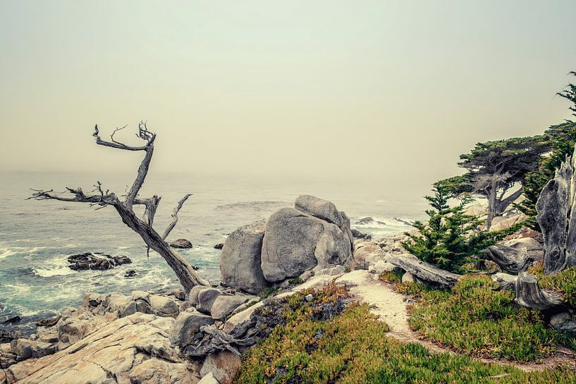 Ghost tree II van Pascal Deckarm