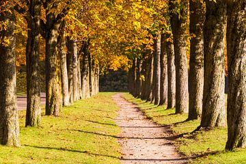 Kastanienallee im Herbst von Werner Dieterich