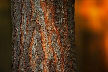 Boomschors van de grove den van Sran Vld Fotografie