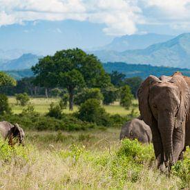 Olifanten op savanne van Jolanda van Straaten
