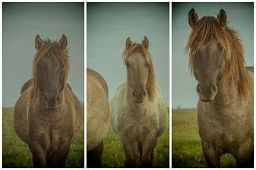 lauwersmeer triptychon 13 von anne droogsma