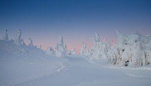 Ochtend licht schijnt over de witte sneeuw