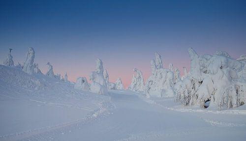 Ochtend licht schijnt over de witte sneeuw van