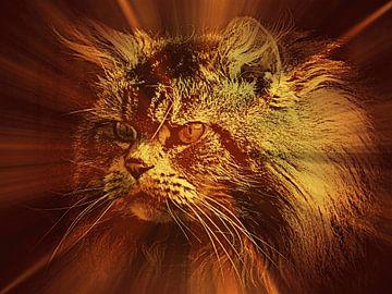 Stralend licht op een Main Coon kat van Leo Huijzer