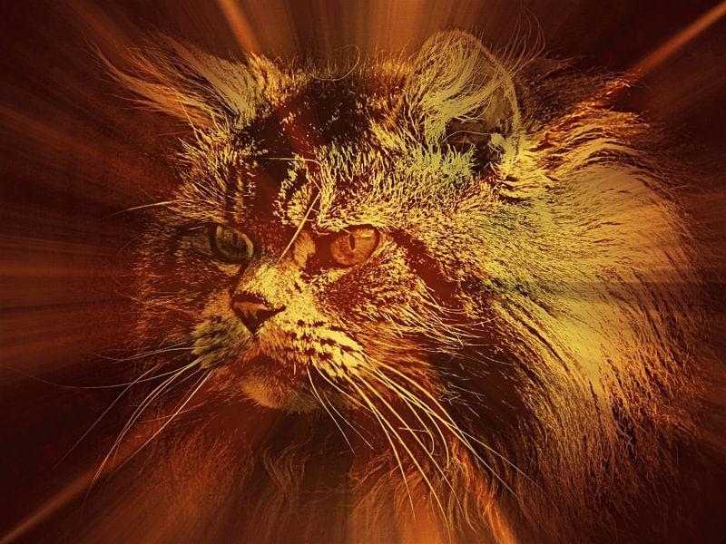 Shining light on Main Coon Cat von Leo Huijzer