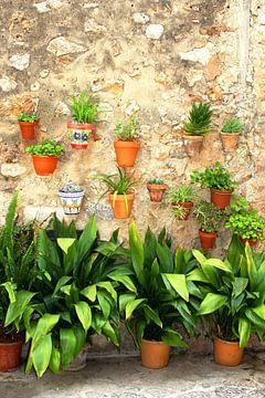 Mauer mit Pflanzen und Töpfen, Valldemossa, Mallorca von Inge Hogenbijl