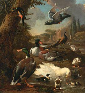 Een pauw, duif, eenden en andere vogels in een tuinsetting, Melchior d'Hondecoeter