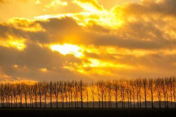 Zonlicht achter de wolken boven een rij bomen van Sjoerd van der Wal