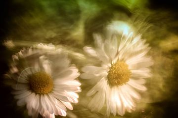 Gänseblümchen mit malerischem Hintergrund von Nicc Koch
