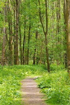 Groen bos vol bomen van Michèle Huge