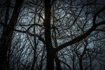 Zon verschuilt zich achter een boom van Kees van der Rest