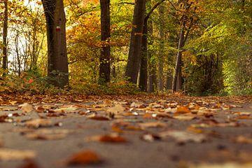 image d'automne sur Kristof Ven