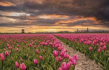 Zonsopkomst bij tulpenveld Schermerhorn