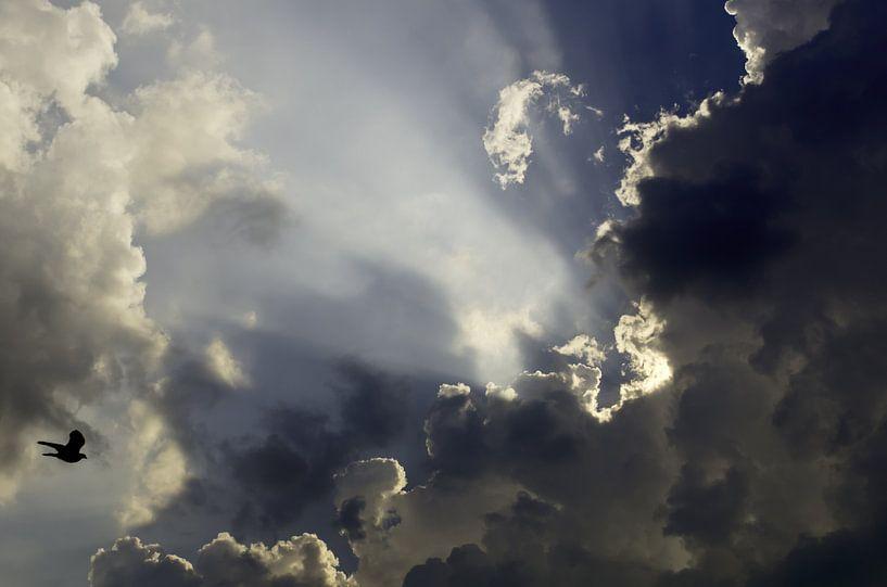 Vlieg naar de zon van Pierre Timmermans