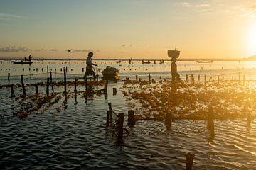 Zeewier boeren in Nusa Lembongan met zonsondergang van Ellis Peeters