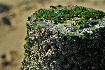Strandpaal op het Strand van Vlissingen van DoDiLa Foto's