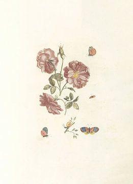 Zwei Zweige mit Rosen, vier Schmetterlingen und einer Schnecke, anonym, 1688 - 1698