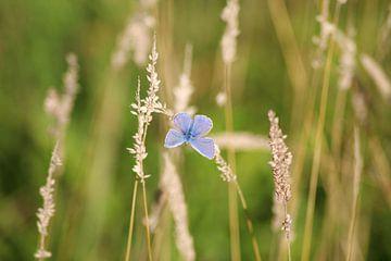 Blauw in t veld van Shirley Douwstra