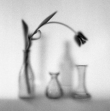 Vasen mit Tulpe von Herman Coumans