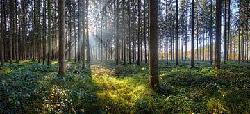 Sonniger Wald von Silvio Schoisswohl