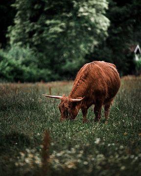 Highlander van Bas Leroy