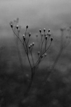 Winterblume Schwarz-Weiß von Eke Salomé