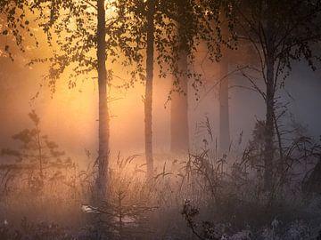 Finnischer Wald von Yvonne Albe