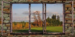 raam uitzicht - herfst
