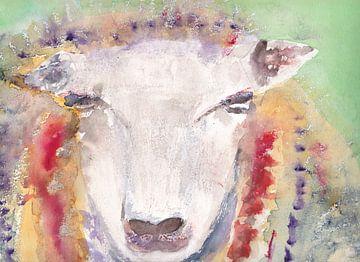 Kleurrijk schaap, aquarel van Catharina Mastenbroek
